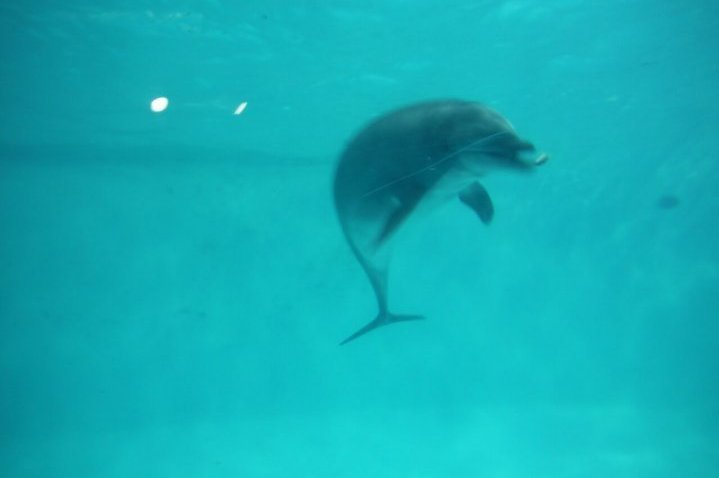 おたる水族館 イルカ