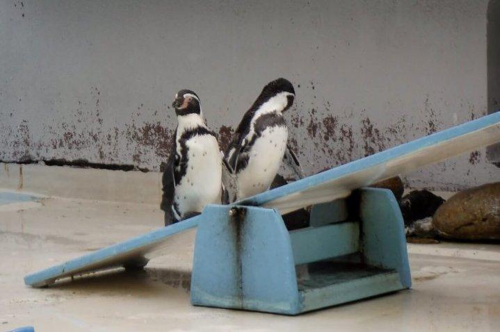 おたる水族館 ペンギンショー