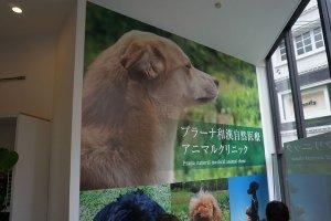 犬の食事療法師範養成講座