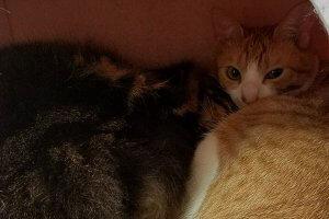 ベッドの中で、二匹の猫