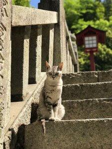 神社の階段の猫