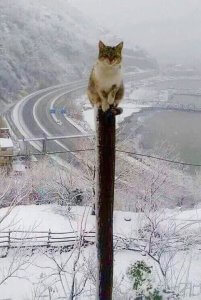 電柱?の上の猫