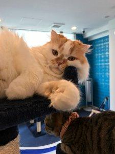 キャットタワーでじゃれる猫たち