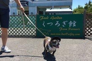 フレブル茉奈の琵琶湖旅行