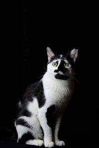 ネコリパブリック「ネコ市ネコ座」