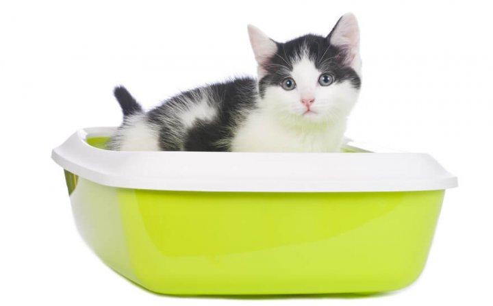 猫の便秘の対策方法は?
