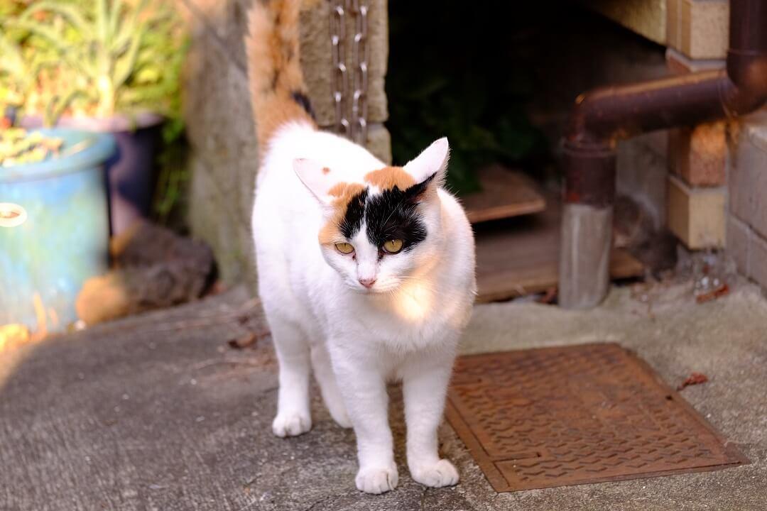 笹塚で出会った三毛ネコ。