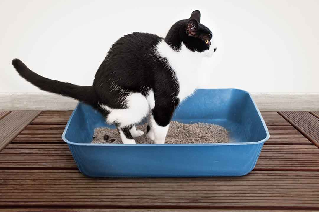マッサージ 猫 便秘