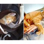 虐待されカバンに入れられて投げ捨てられた猫…それでも人間への信頼を取り戻す