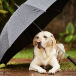 雨でも大丈夫!関西の全天候型ドッグラン7選