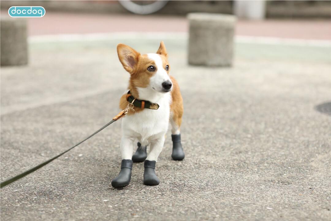 docdogの愛犬用「おさんぽソックス」