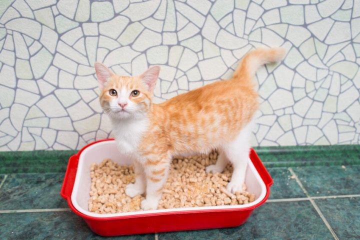 どうする猫のトイレのしつけ方 ファニマル Fanimal