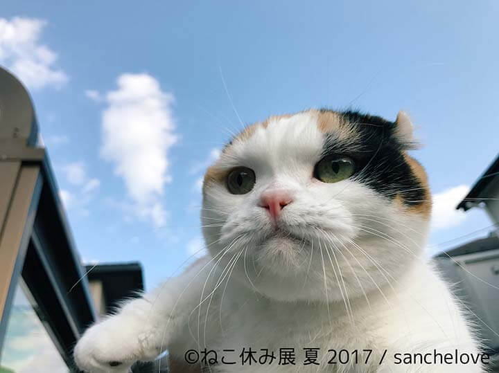 ねこ休み展・sanchelove