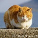 ねこ休み展・野良猫散歩