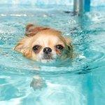 愛犬と泳ごう! 関東のドッグプール7選