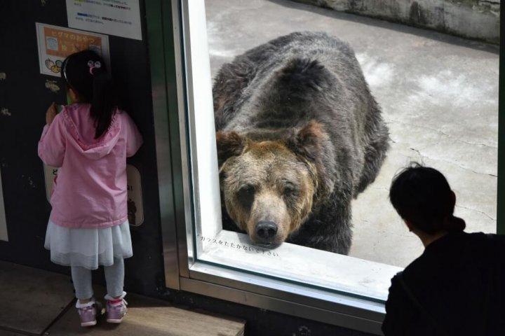 釧路市動物園 熊