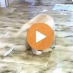 かわいい!おもしろい!犬の動画3選 | ワンだろう?動画