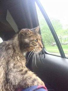 海外記事 15歳のボロボロの猫が保護