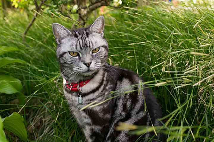 プレスリリース 猫のキメ顔