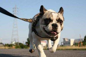 プレスリリース 犬のキメ顔