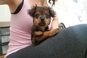 安楽死させてくれと獣医に置き去りにされた子犬