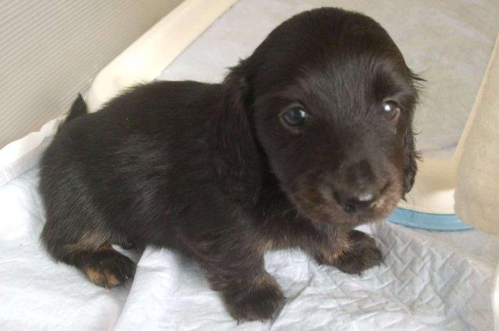 幼年期 犬
