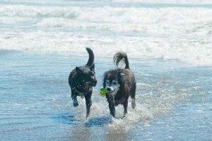 犬とハーブ 自律神経