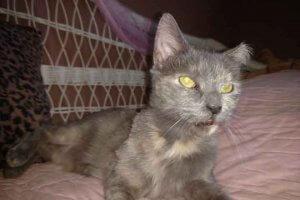 保護猫マーフィー