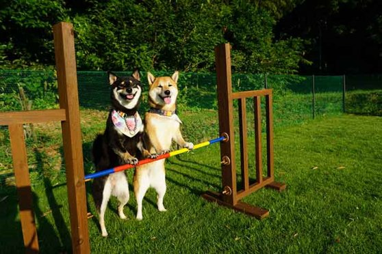 日本犬の愛で方 ひめこちゃんとあずきちゃん