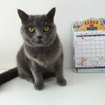 千駄ヶ谷の黒猫
