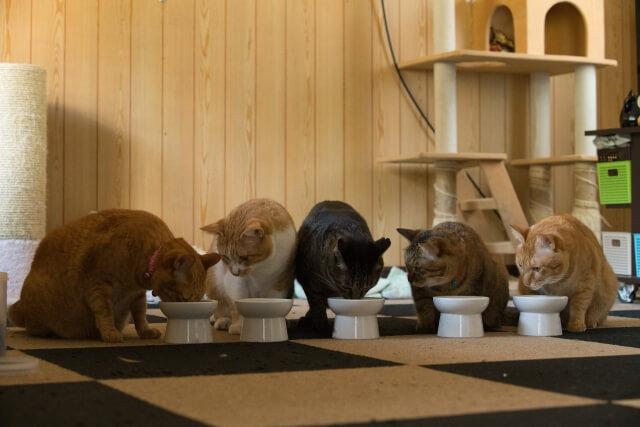 多頭飼いの猫の食事中