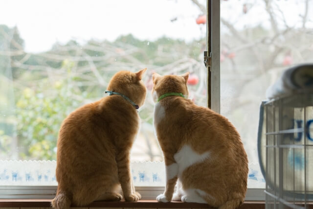 窓の外を眺める猫たち