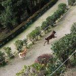 柴犬と連携プレーでオヤツのひったくり犯を捕まえた!ー甲斐犬ジュウザのびっくり事件簿