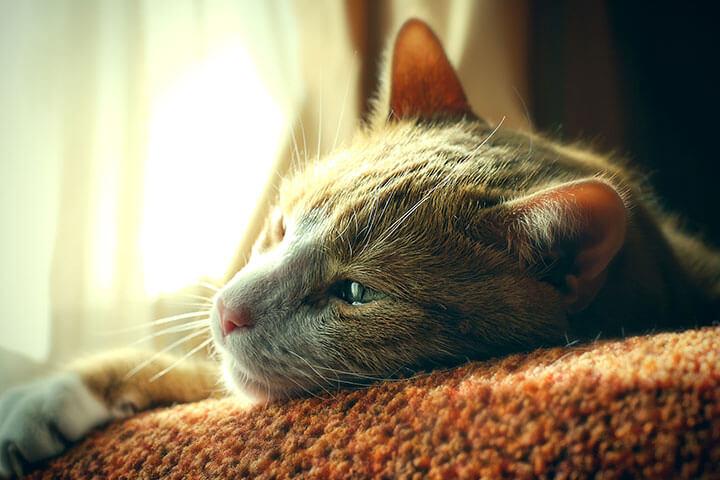 過敏 猫 知覚 猫の知覚過敏症