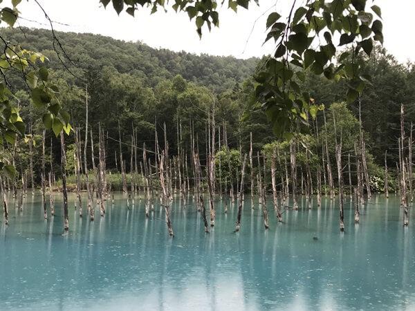 雨の日の青い池