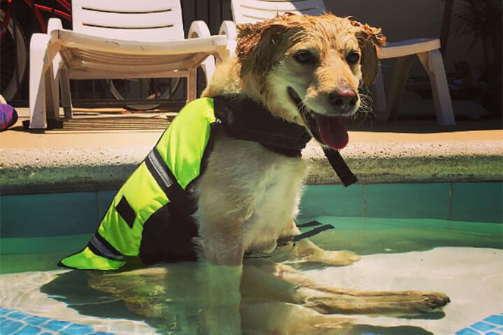 保護犬アニー