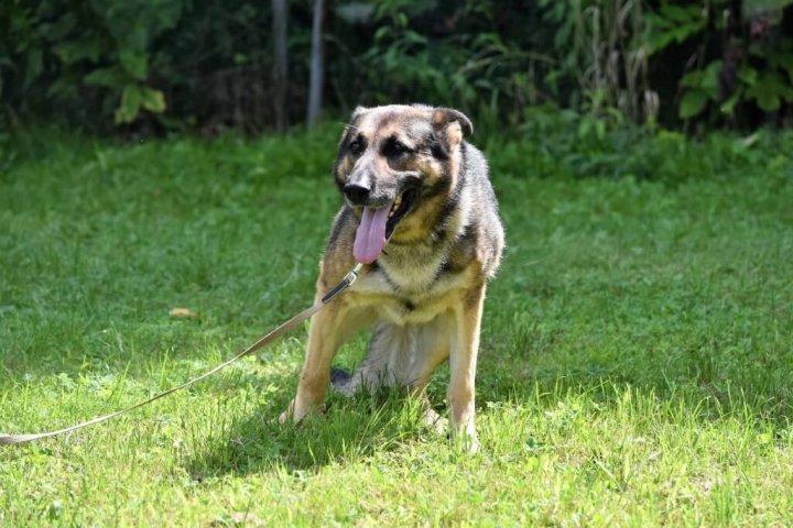 マキドッグスクール 遺留品を見つける犬