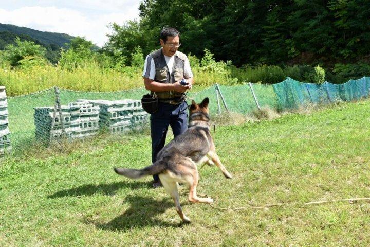 マキドッグスクール 警察犬訓練