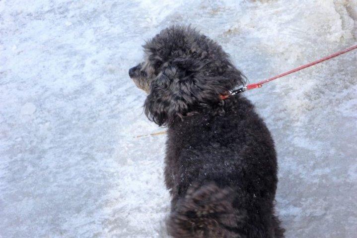 災害救助犬 訓練