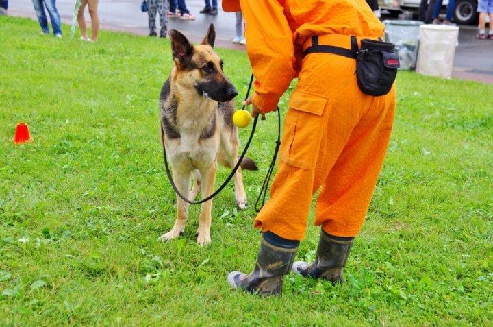 災害救助犬の訓練