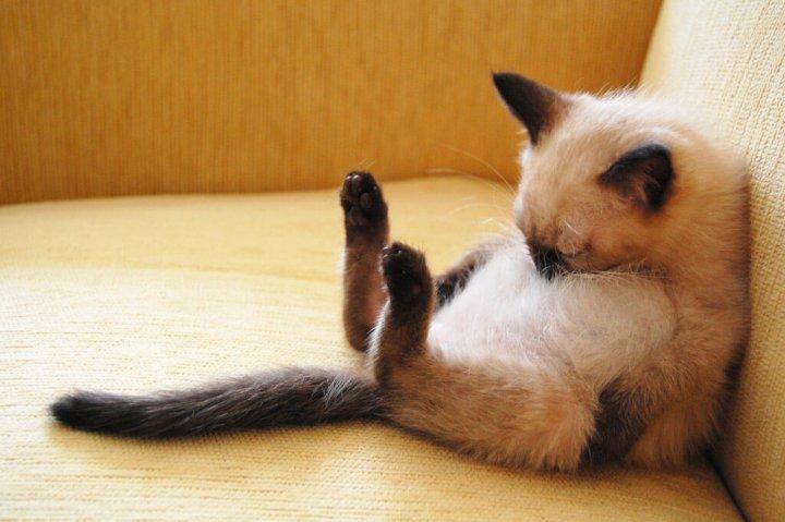 ぐたっとしている猫