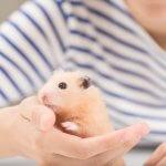 一人暮らしでも飼える!おすすめの小動物ペット9選