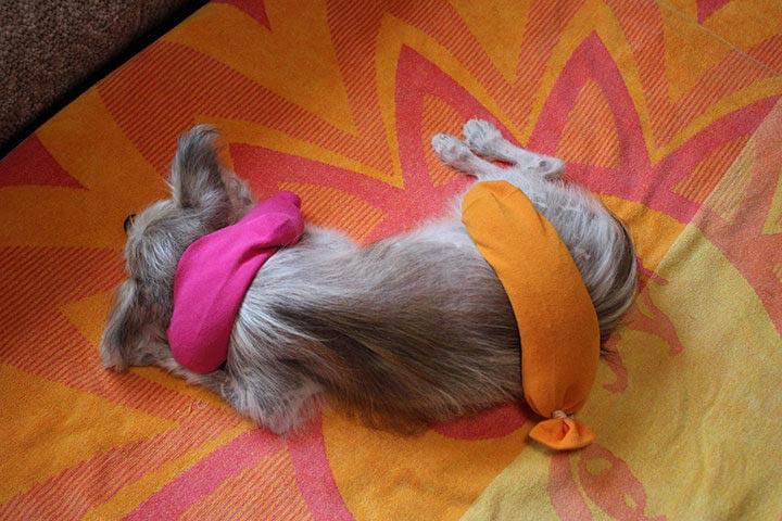 愛犬も喜ぶ小豆のホットパックの作り方