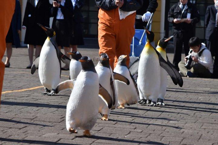 登別マリンパークニクス ペンギンパレード