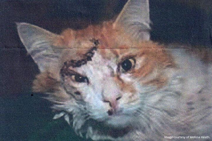 大地震で頭がい骨骨折の重傷を負い、5年をかけて生還した猫   ファニマル   Fanimal
