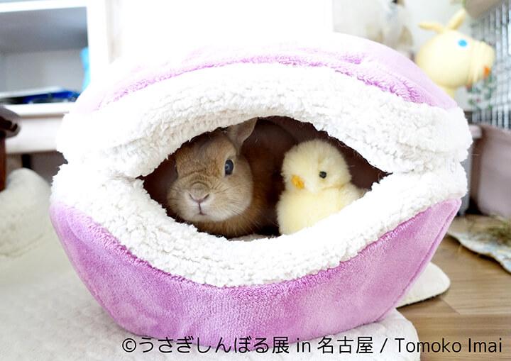 うさぎしんぼる展 | Tomoko Imai