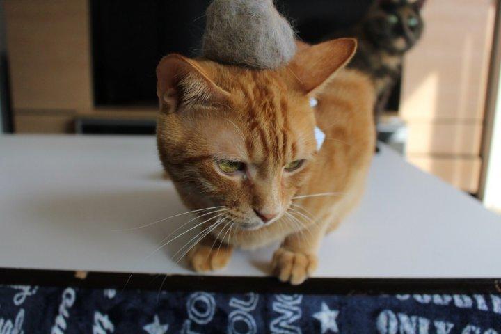 猫の抜け毛帽子