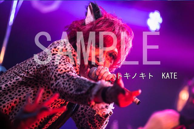 3074620-tokino_kate