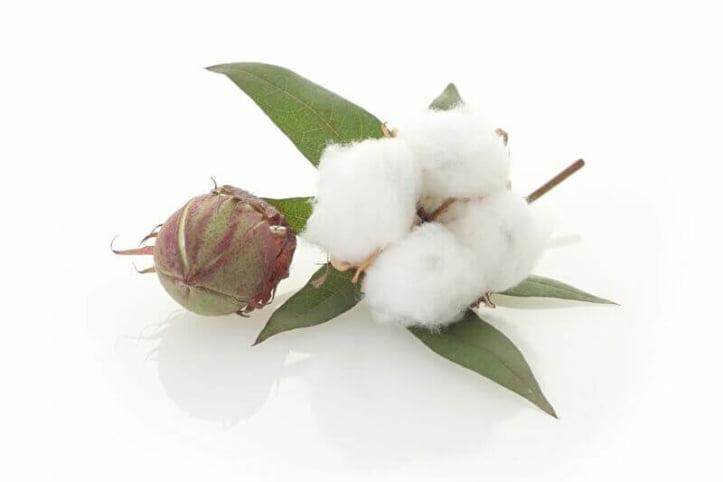 ニット素材 綿 コットン