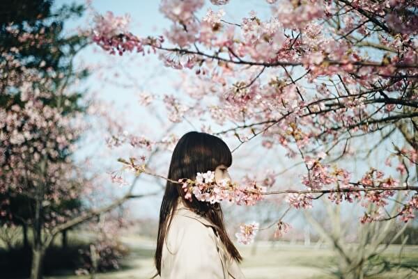 桜の木と女性